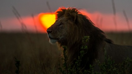Масаи-Мара: Закаты и рассветы (20 фото)