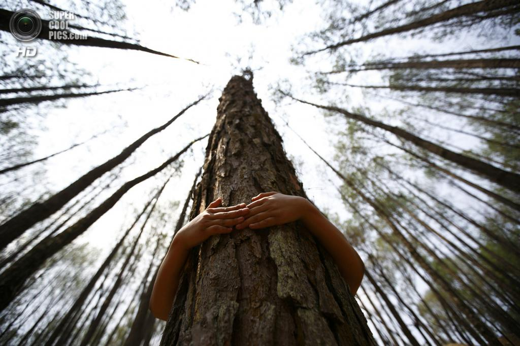 Непал. Катманду. 5 июня. Школьники и студенты обнимают деревья в честь Всемирного дня окружающей среды. (REUTERS/Navesh Chitrakar)