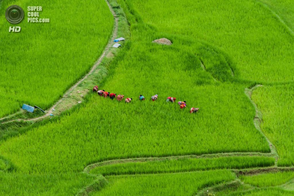 Заливное поле. (Sahadev Byanjankar)