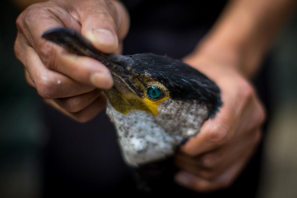 Ночная рыбалка с бакланами (20 фото)