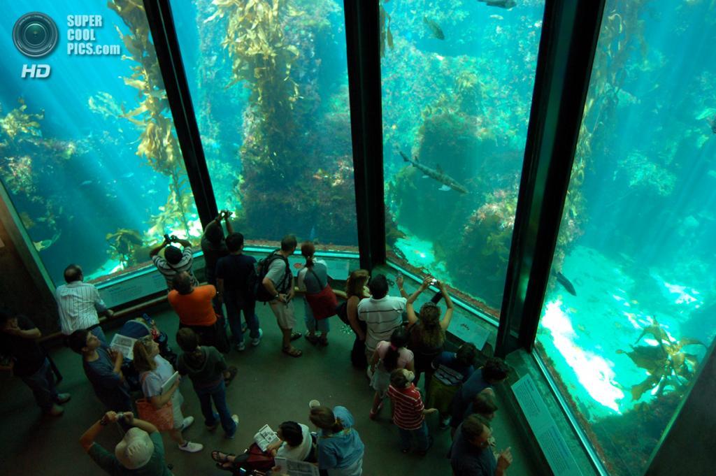 5 место. США. Монтерей, Калифорния. Аквариум бухты Монтерей. Общий объем воды составляет 4,5 млн л. (sciencetrio.wordpress)
