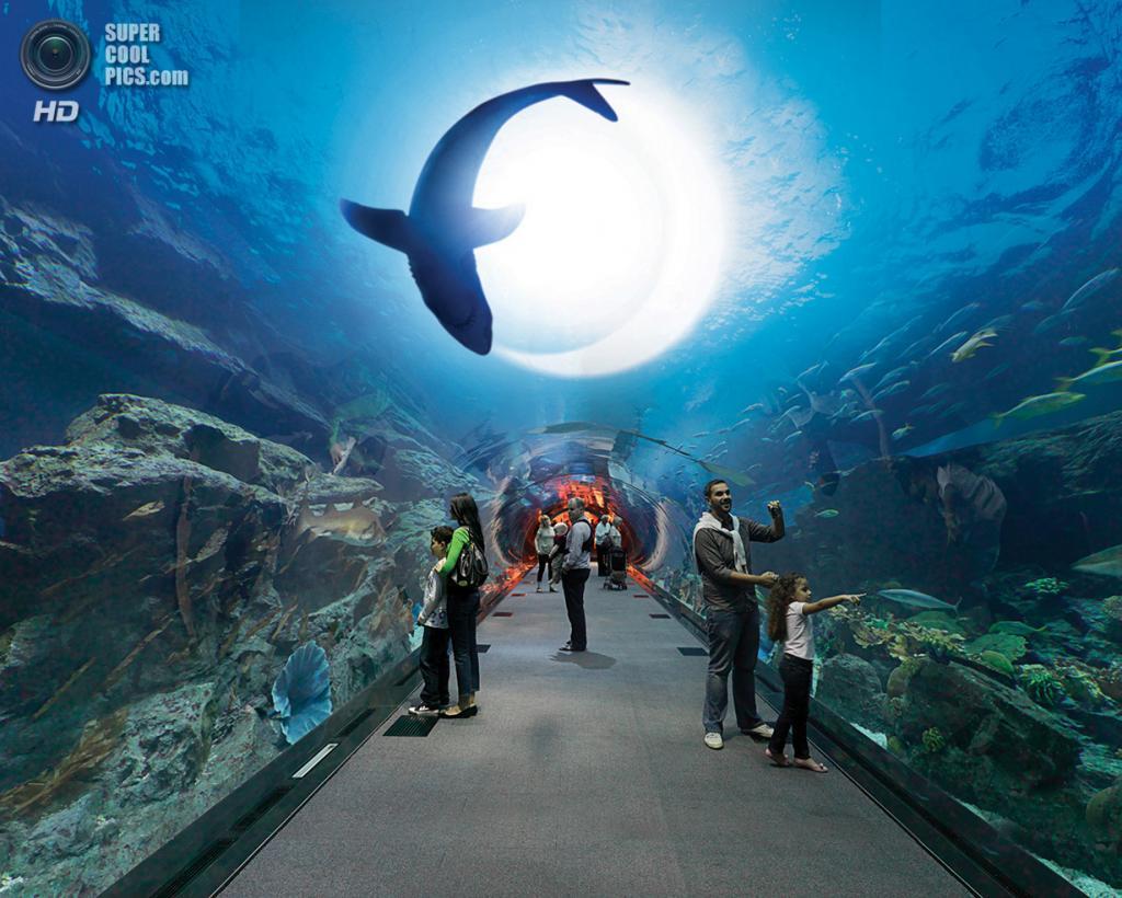 ОАЭ. Дубай. Аквариум в торгово-развлекательном центре «Дубай». (justtoursdubai)
