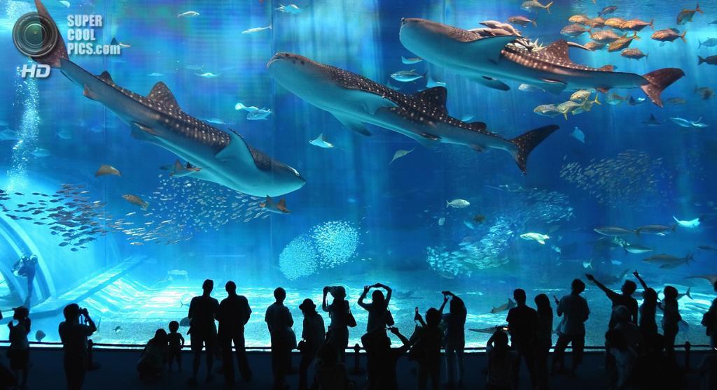 3 место. Япония. Окинава. Аквариум в Океаническом выставочном парке. Общий объем воды составляет 7,5 млн л. (Rosanna Leung)