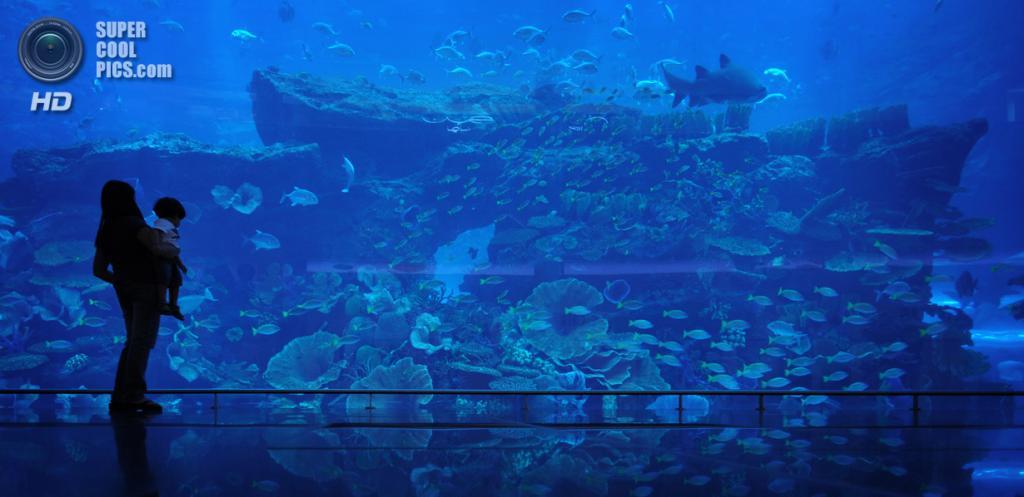 ОАЭ. Дубай. Аквариум в торгово-развлекательном центре «Дубай». (David H)