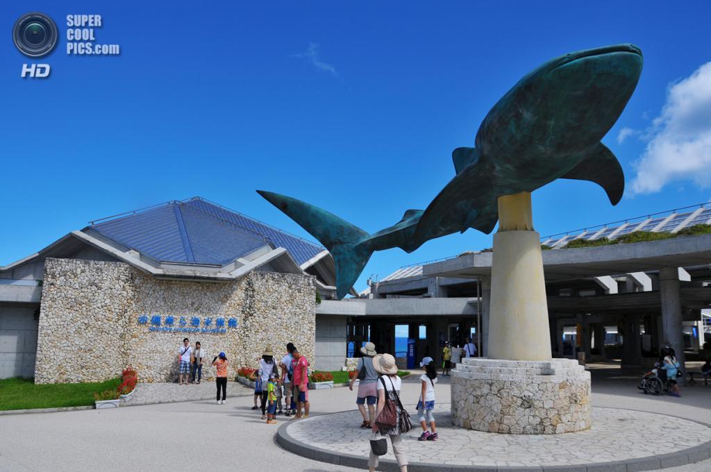 Япония. Окинава. Аквариум в Океаническом выставочном парке. (Rosanna Leung)