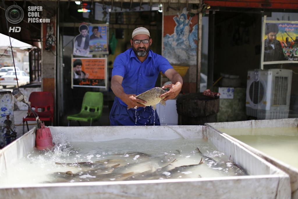 Ирак. Садр-Сити, Багдад. 4 мая. Продавец свежей рыбы держит карпа, из которого готовят традиционное месопотамское блюдо «масгуф». (REUTERS/Ahmed Jadallah)