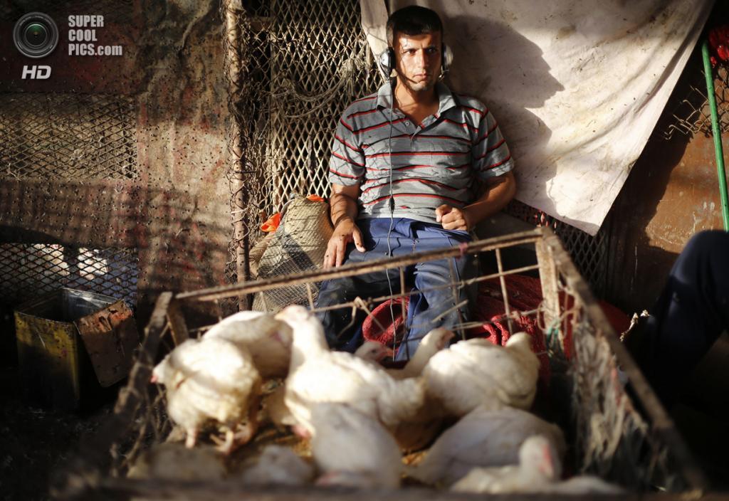 Ирак. Садр-Сити, Багдад. 29 апреля. Продавец домашней птицы слушает музыку на рынке. (REUTERS/Ahmed Jadallah)