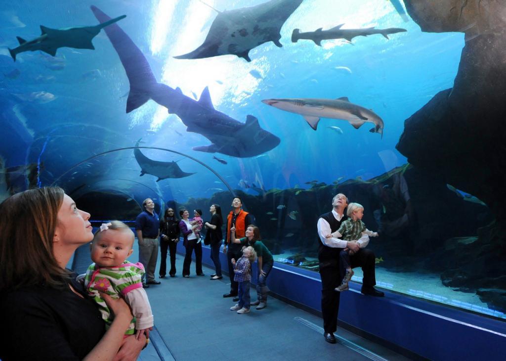 Топ-5 самых огромных аквариумов в мире (15 фото)