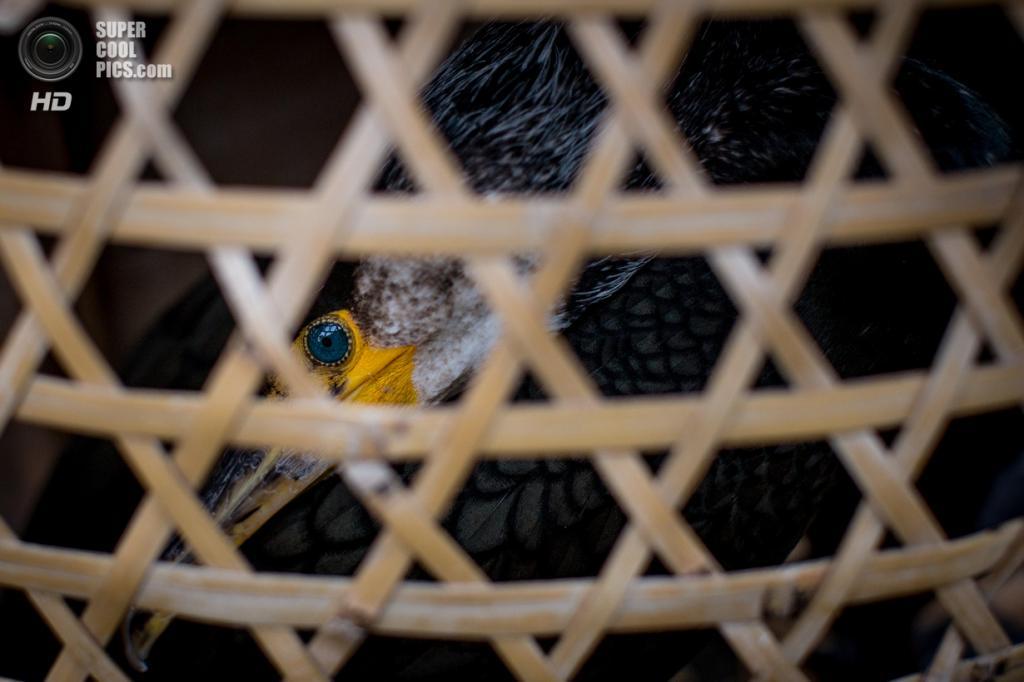 Япония. Гифу. 2 июля. (Chris McGrath/Getty Images)