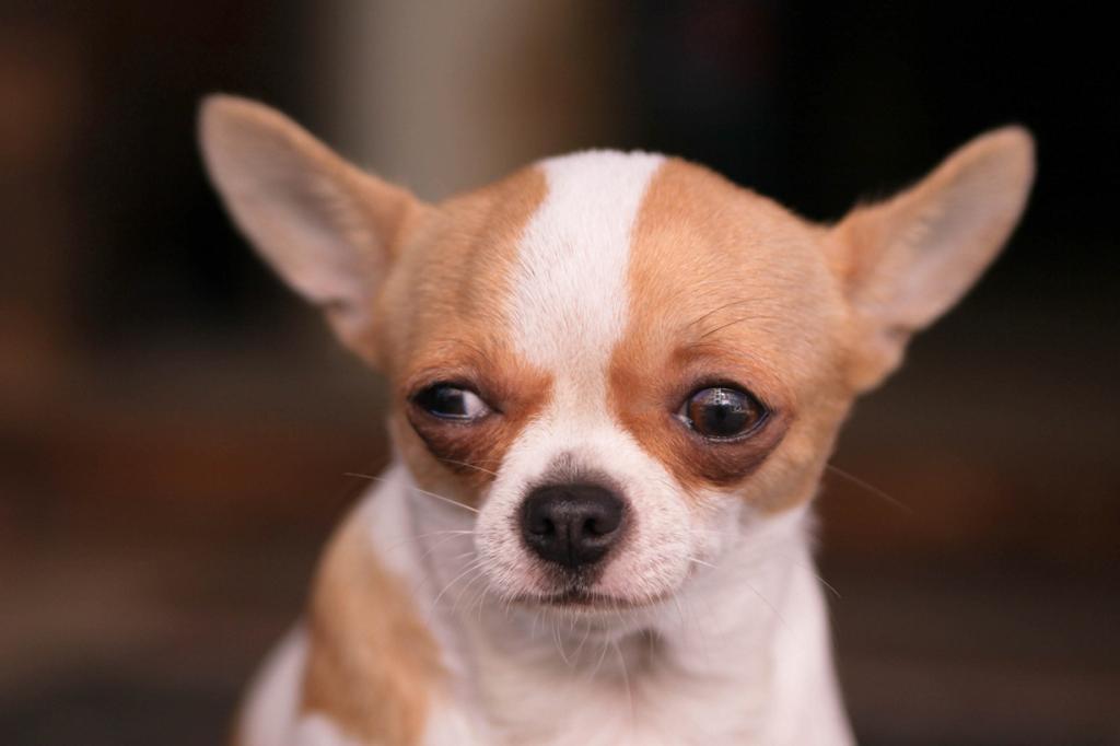 Топ-15 самых мелких пород собак (29 фото)