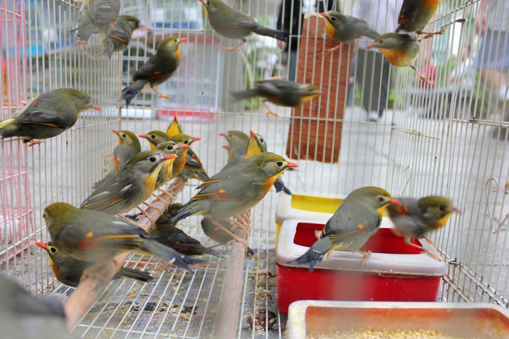 Китай. Гонконг. Птичий рынок на улице Юэнь По. (DPECullen)