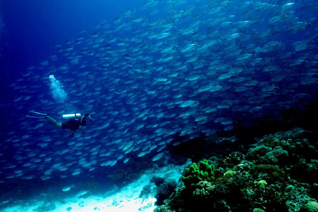 6 место. Сулу. Филиппины. Риф Туббатаха. Состоит из 360 видов кораллов. (q phia)