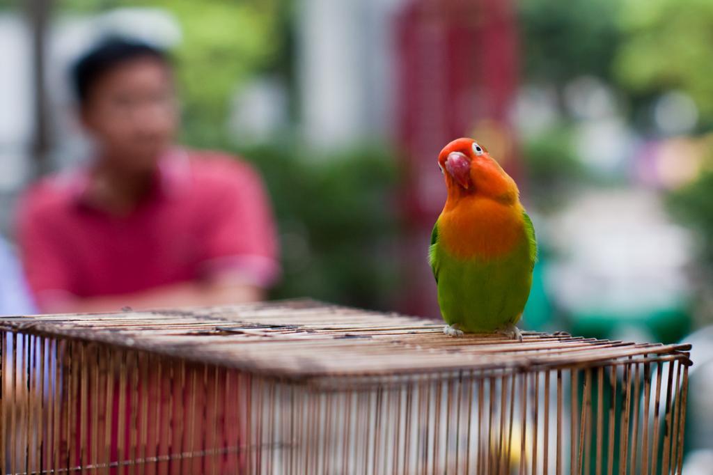 Китай. Гонконг. Птичий рынок на улице Юэнь По. (Jens Schott Knudsen)