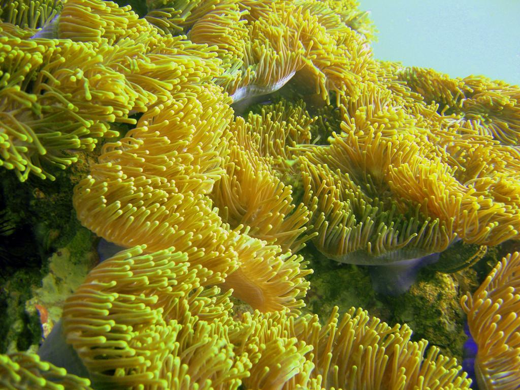 4 место. Индия. Рифы Андаманского моря. Состоит из 197 видов кораллов. (dachalan)