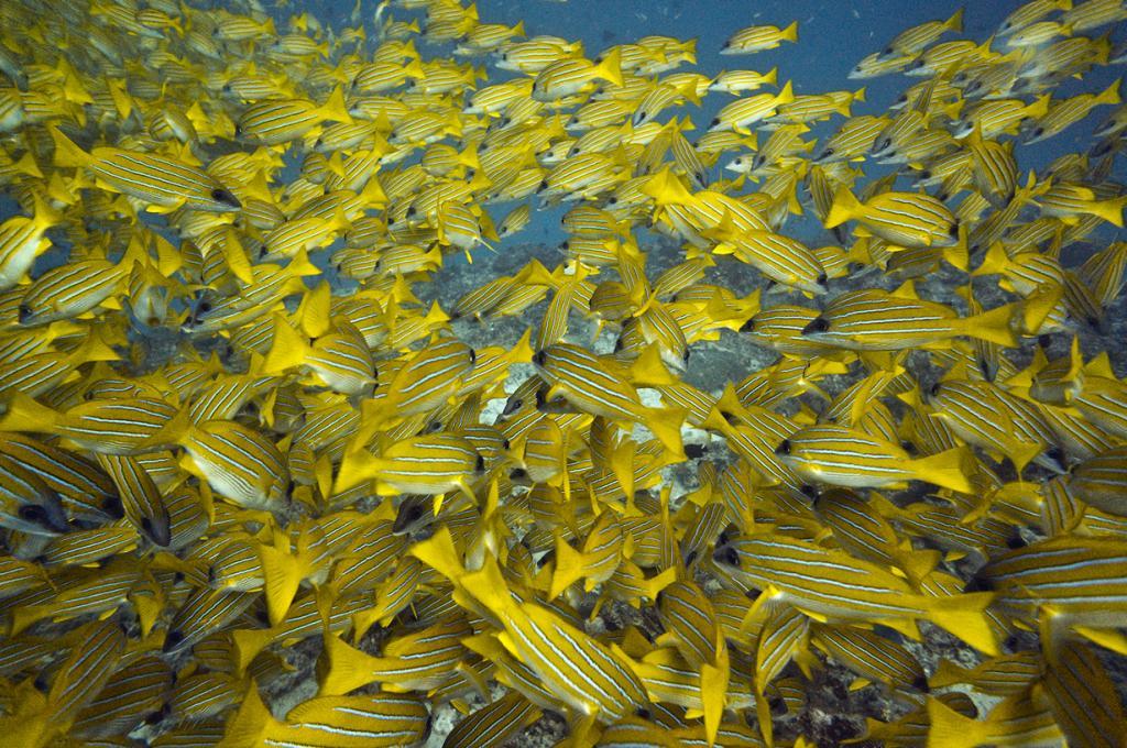 Индийский океан. Мальдивы. (Malcolm Browne)