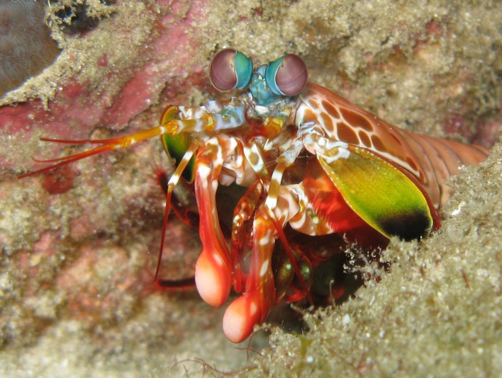Индия. Рифы Андаманского моря. (prilfish)