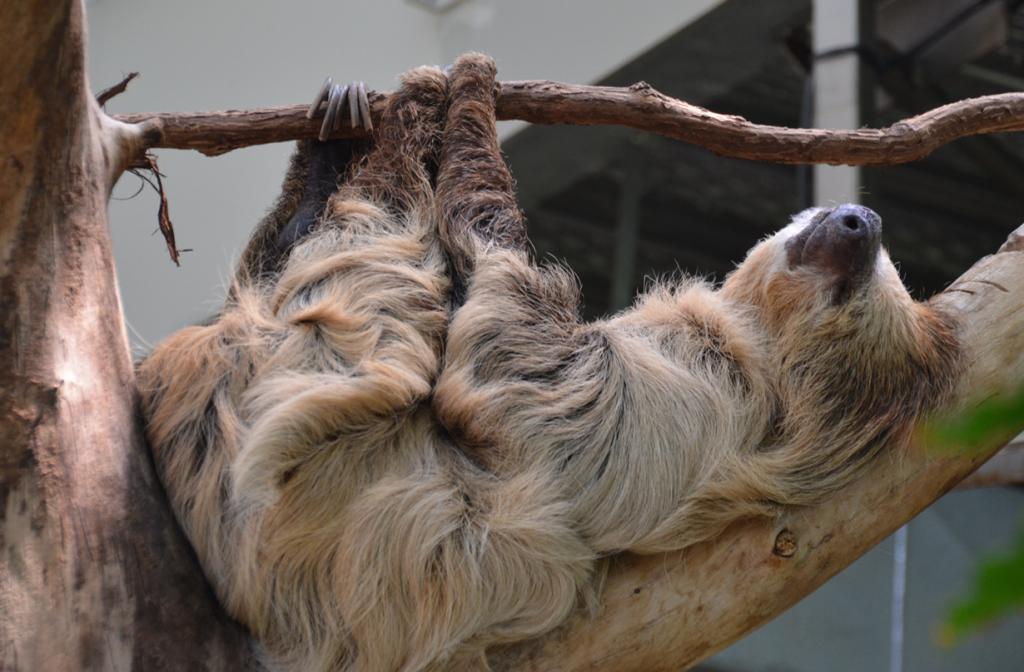 Ленивцы. (jjjj56cp)