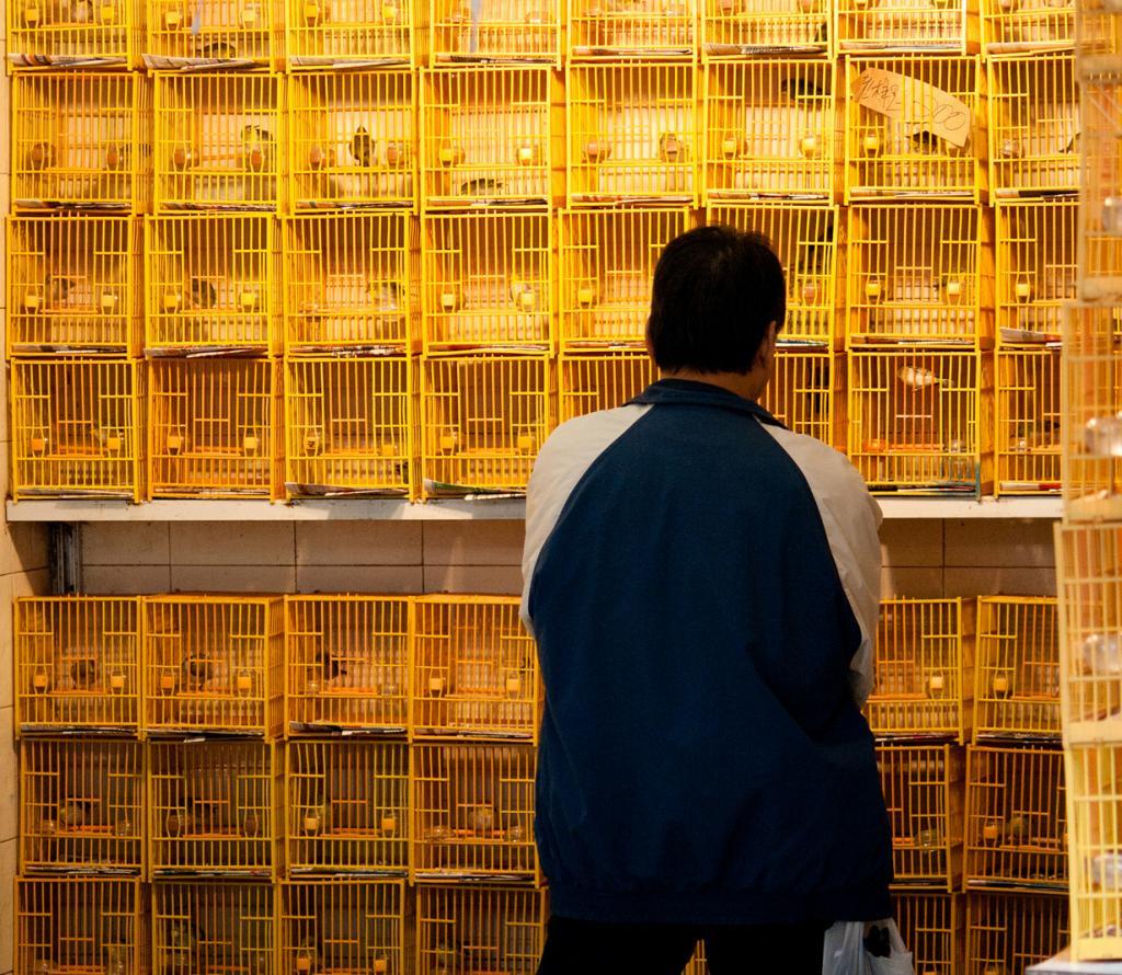 Китай. Гонконг. Птичий рынок на улице Юэнь По. (Chris Geatch)