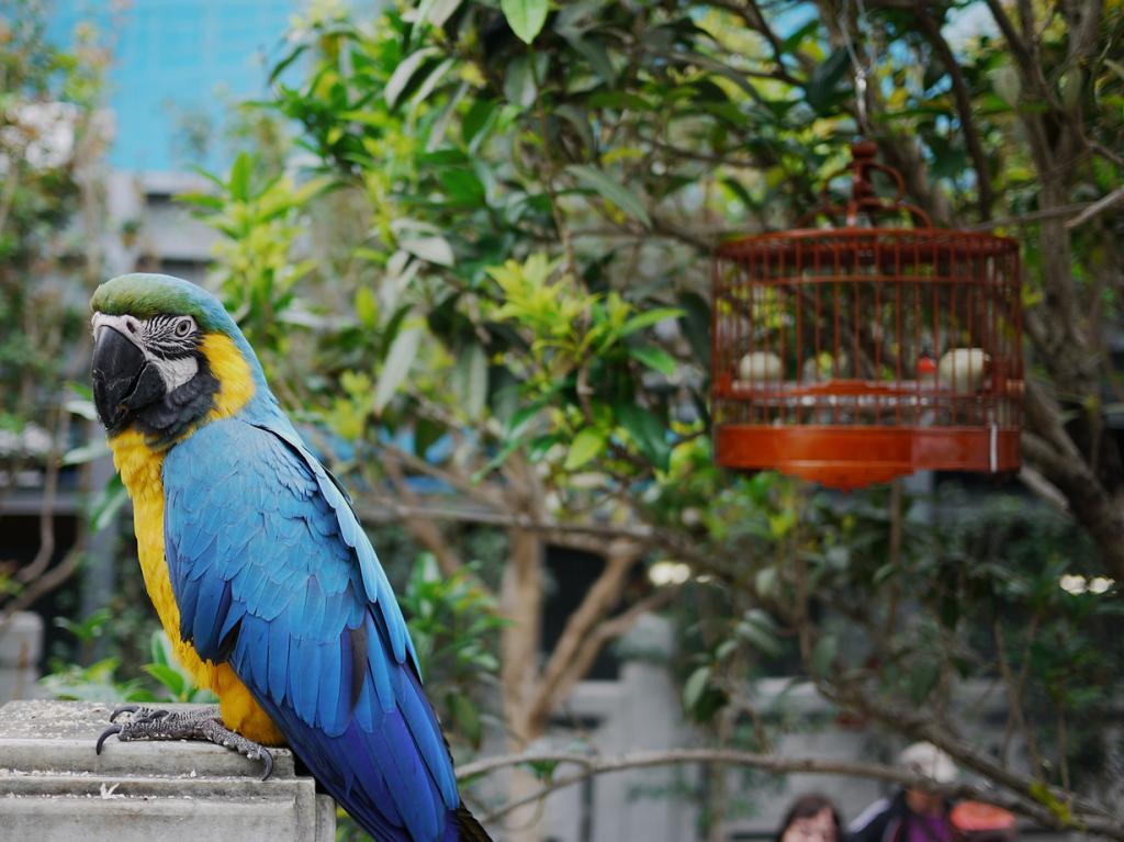 Китай. Гонконг. Птичий рынок на улице Юэнь По. (Derrick S)