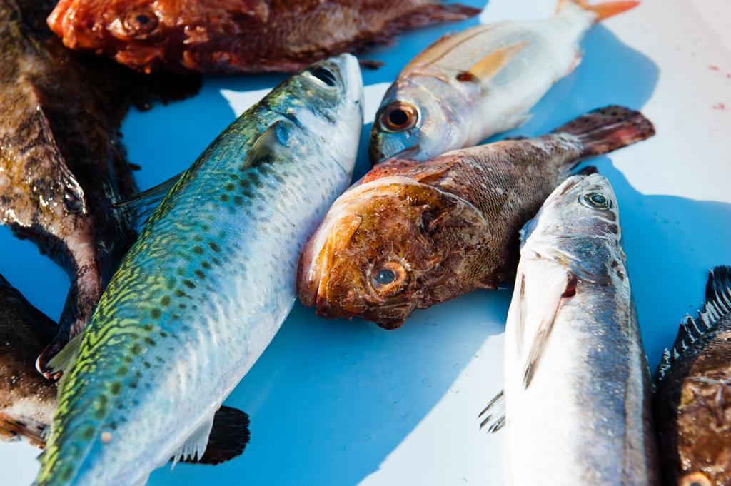Франция. Регион Прованс — Альпы — Лазурный Берег. Рыба. (Gustave Deghilage)