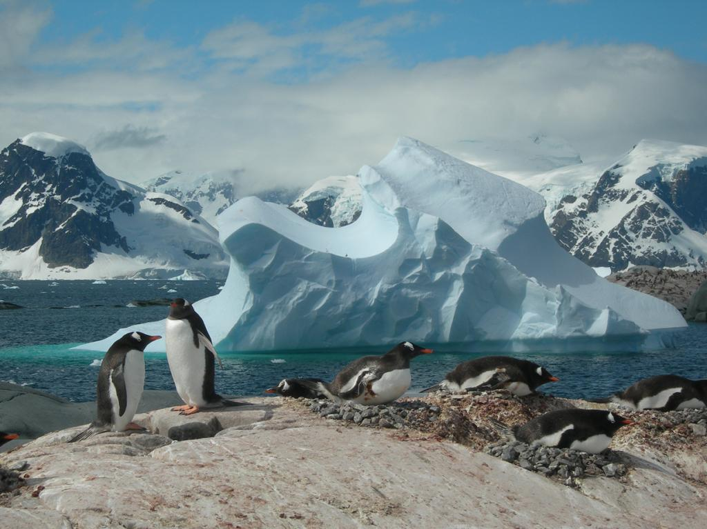 Антарктида. Айсберги. (Chris Dent)