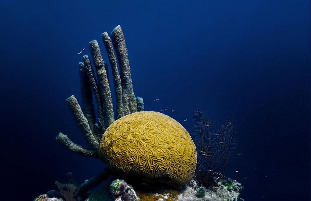 Белиз. Белизский Барьерный риф. (jayhem)