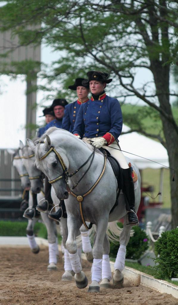 Липпицианская лошадь. (Presidential Inaugural Committee)