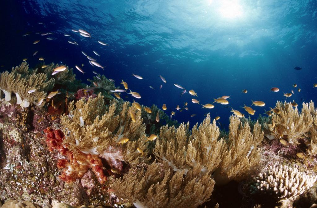 Индонезия. Коралловый риф Раджа-Ампат. (Tony Shih)