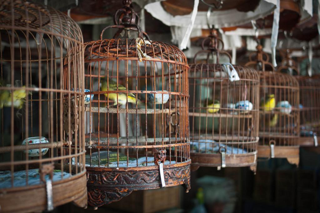 Китай. Гонконг. Птичий рынок на улице Юэнь По. (Neil Ballantyne)