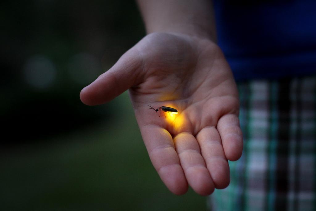 Светляки. (Jessica Lucia)