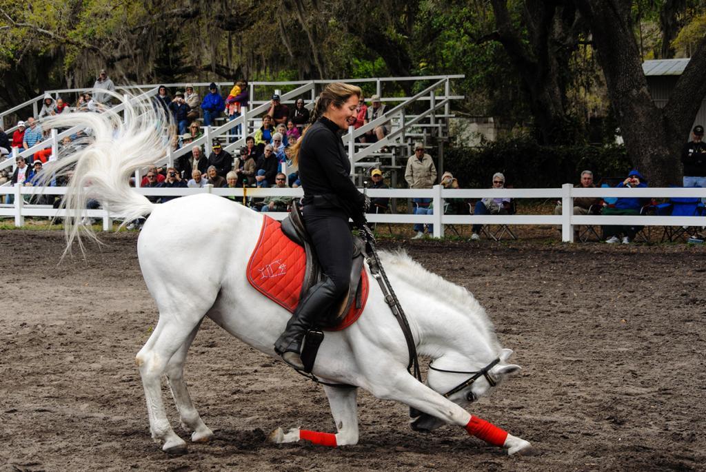 Липпицианская лошадь. (naql)