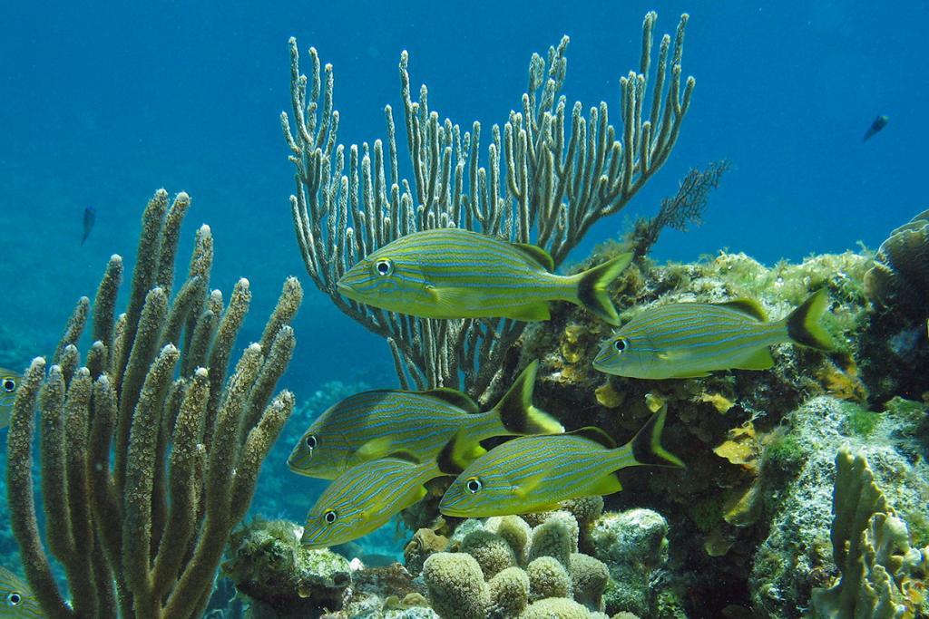 Карибское море. Гондурас. Роатан. (Dave C)