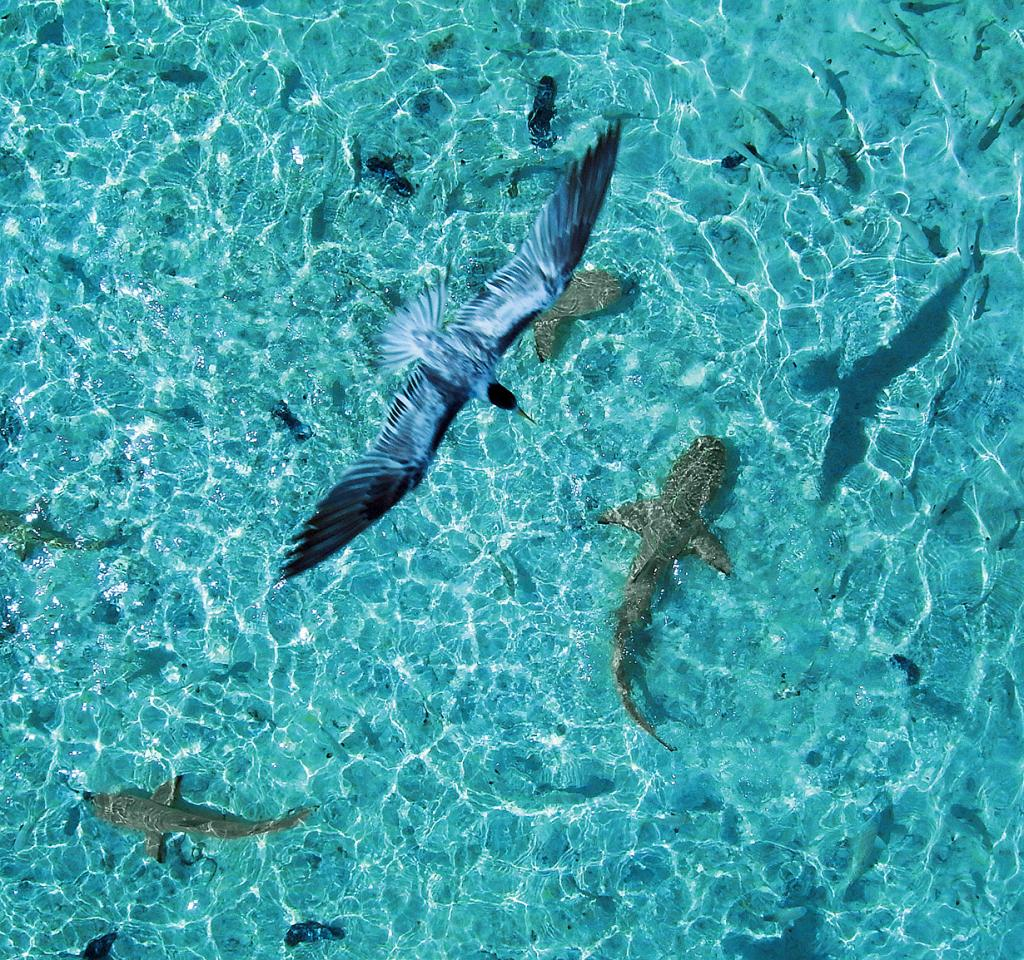 Тихий океан. Остров Таити. (Pierre Lesage)