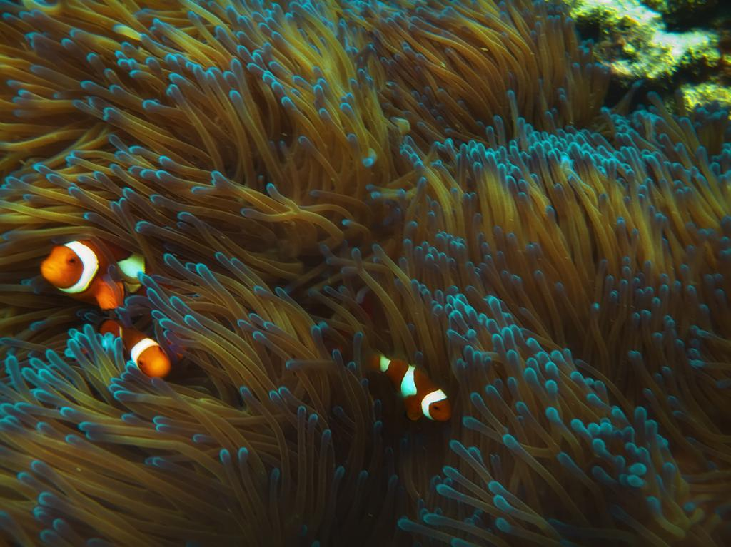 1 место. Коралловое море. Австралия. Большой Барьерный риф — самый крупный риф в мире. Состоит из более 2900 отдельных коралловых рифов. Общая площади около 344 400 кв. км. (robdownunder)