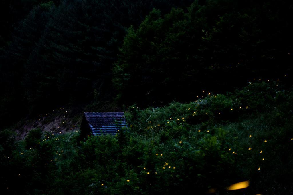 Светляки. (Luka Knezevic - Strika)