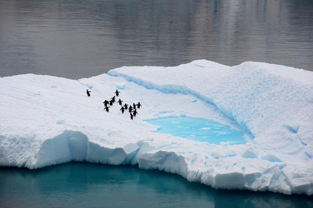 Антарктида. Айсберги. (Peter Pawlowski)