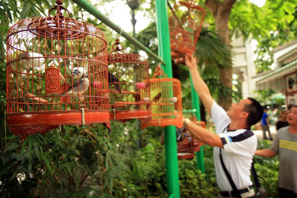 Китай. Гонконг. Птичий рынок на улице Юэнь По. (Barney Moss)