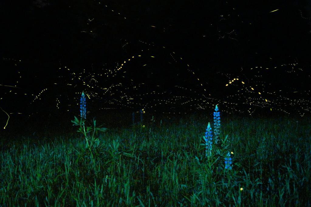 Светляки. (Mike Lewinski)