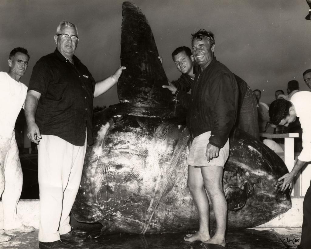 Луна-рыба. 1964 год. (Florida Keys--Public Libraries)