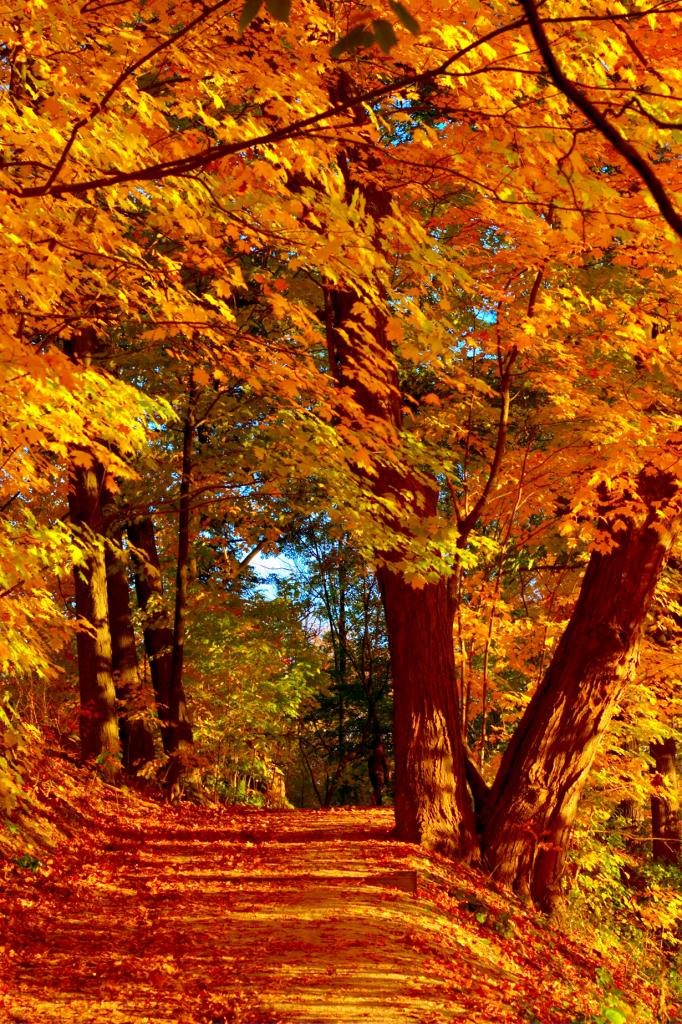 Осень. (Ian Muttoo)