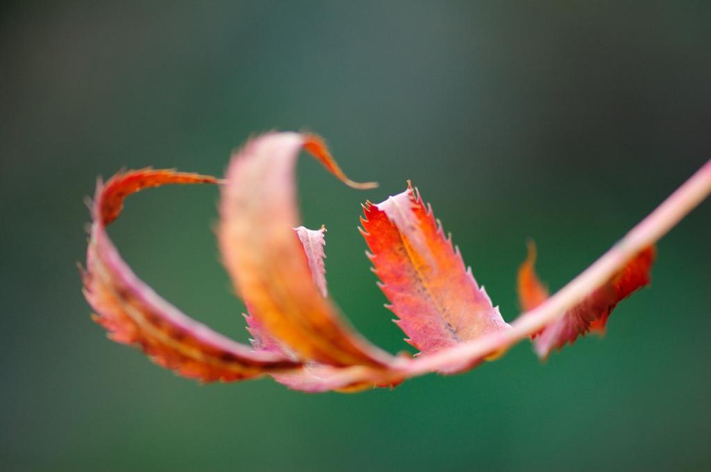 Осень. (Jens Dahlin)