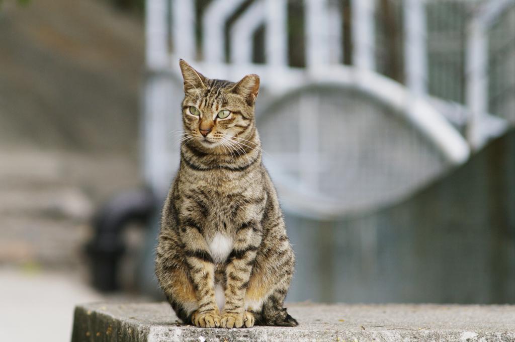 Конечно, этот рейтинг не мог обойтись без котиков. Домашние кошки очень смышлёные — их главным признаком интеллекта является умение приспосабливаться. Более того, если ваша мурка не выполняет команду, которой вы её учили, то это не значит, что она её забыла. Скорее, она просто не хочет её выполнять: умение сказать «нет» — тоже признак интеллекта и силы воли. (Leung Ching Yau Alex)