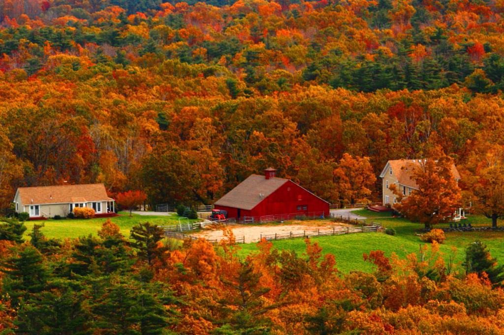 Осень. (Elliot Gilfix)
