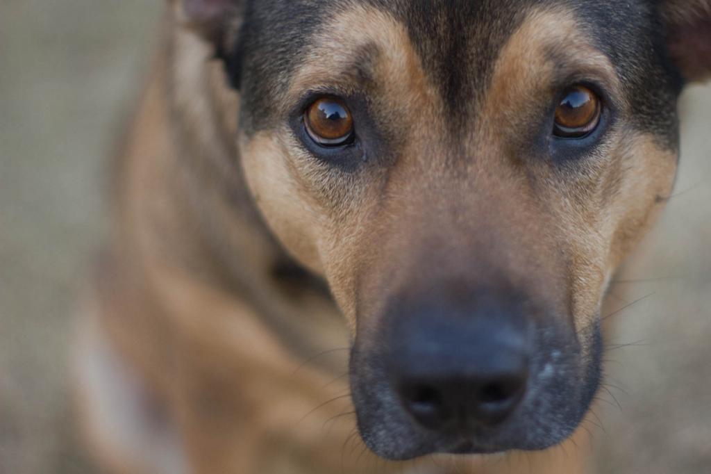 «Лучший друг человека» — собака — существо очень смышлёное. При должном обучении она способна понимать 250 слов и жестов, считать до пяти, совершать простейшие математические действия. Стоит упомянуть, что самая умная порода собак — пудели. (elizabeth tersigni)