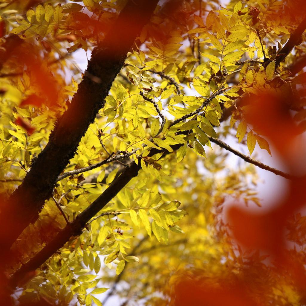 Осень. (jenny downing)