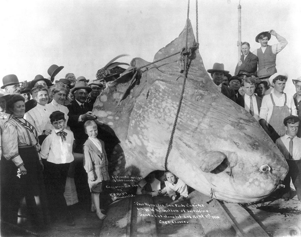 Луна-рыба. 1910 год. (Library of Congress)
