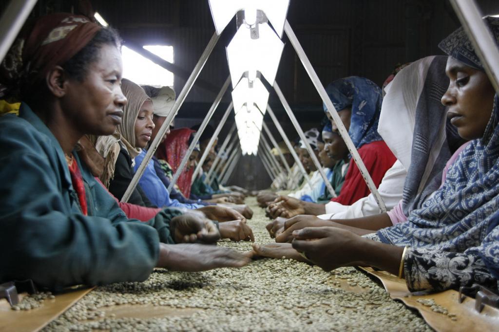 5 место. Эфиопия. 390 000 000 кг в год. (DFID - UK Department for International Development)