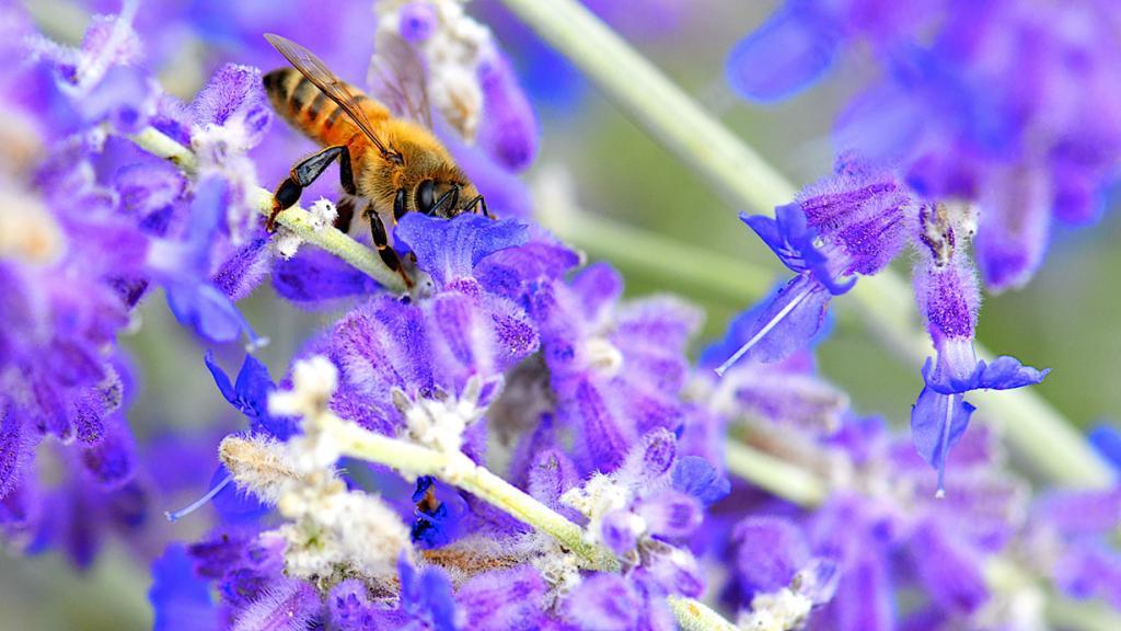 Любители нектара. (Danny Perez Photography)