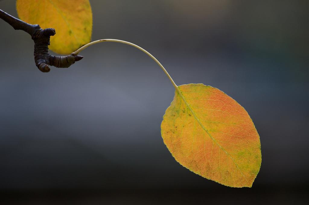 Осень. (Simon)