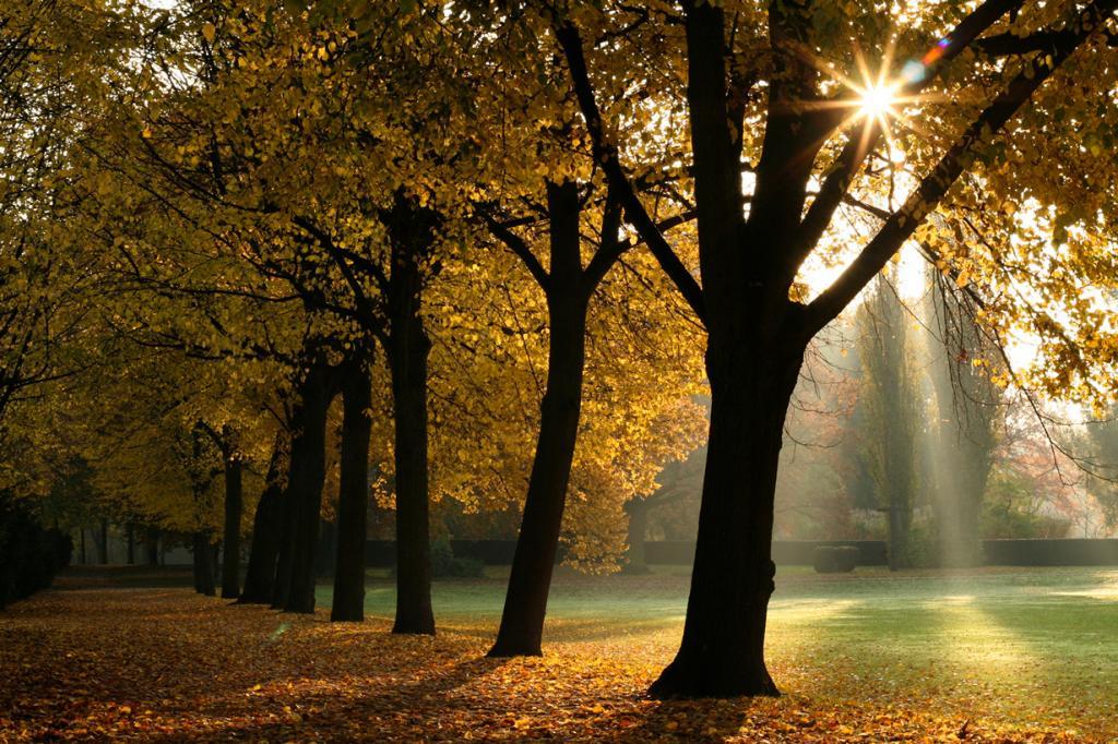 В осеннем парке. (Philipp Antar)